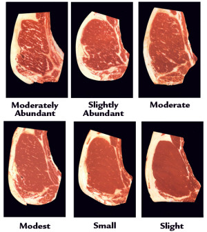 Beef Grades - The Cattle Site