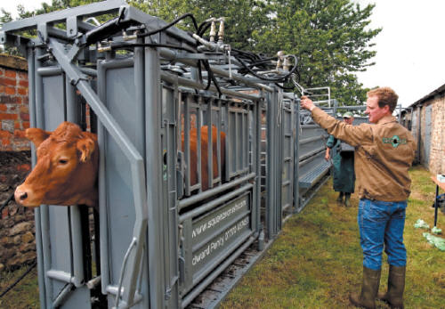 Cattle Movement Systems The Cattle Site