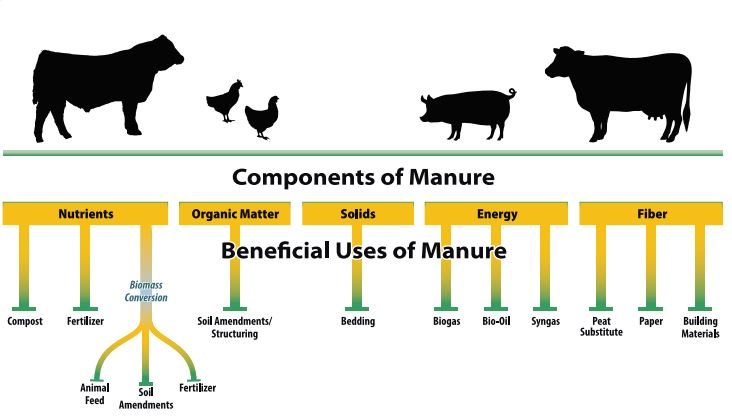 Components of Manure