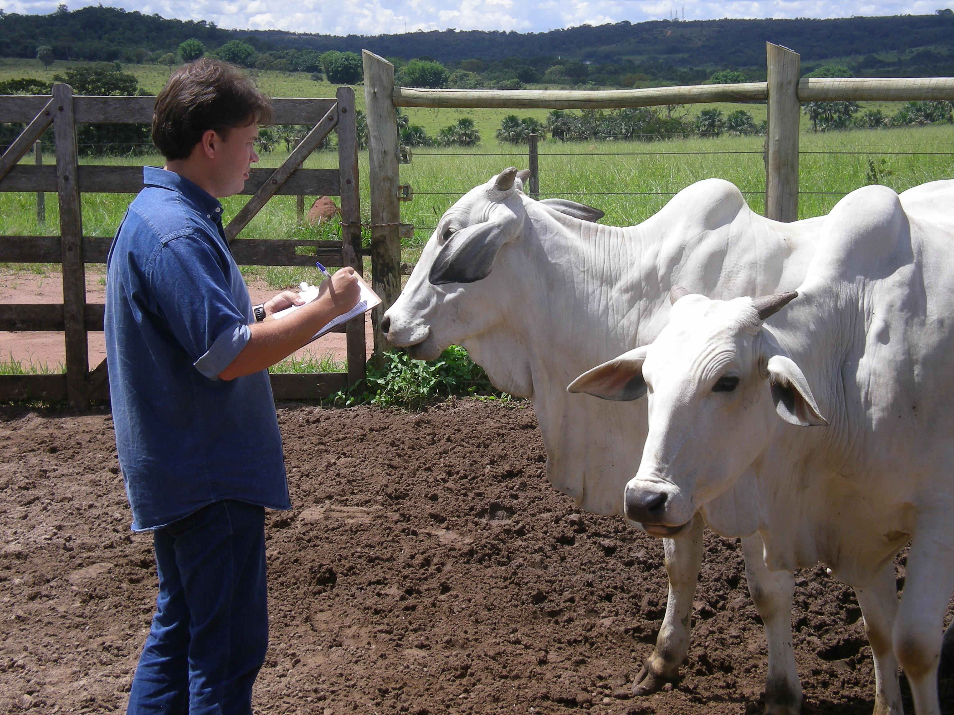 FAI Brazil Cattle Scoring